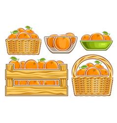 Oranges set vector