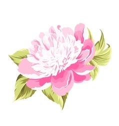 Peony spring flower vector image