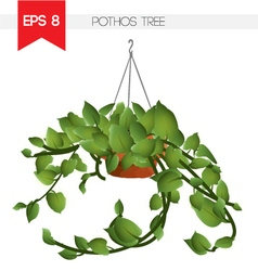 Pothos tree vector image