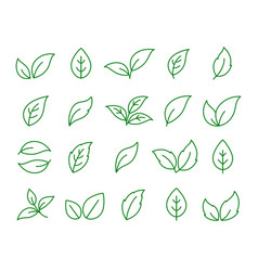 set of linear green leaf icons on white vector image
