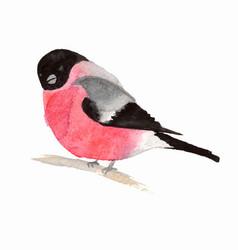 Watercolor bird bullfinch vector