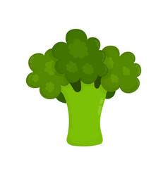 broccoli raw modern flat style vector image vector image