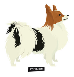 dog collection papillon geometric isolated object vector image