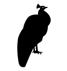 peacock silhouette icon eps vector image