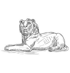 Stone lion 5 vector