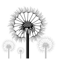 dandelions vector image