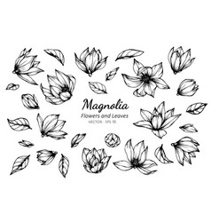 collection set of magnolia flower and leaves vector image