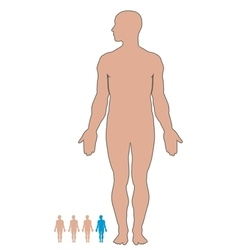 Man body vector image