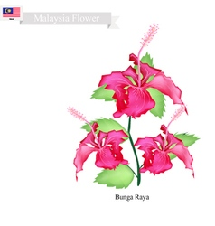 National Flower of Malaysia Bunga Raya vector