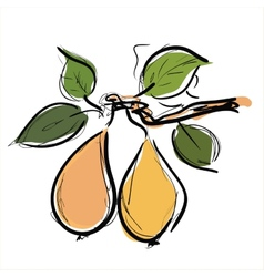 Pears fruit vector image