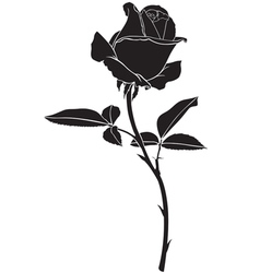 roses silhouette vector image vector image