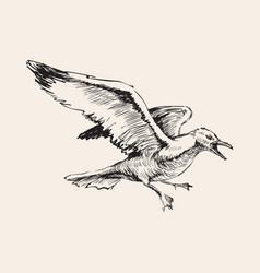 Angry flying seagulls hand drawing sketch vector
