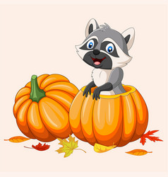 Cartoon happy raccoon in pumpkin basket vector