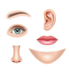 face realistic human parts nose head eyes mouth vector image