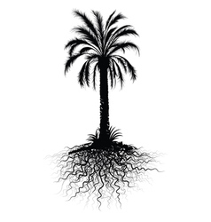 Palm tree sketch vector