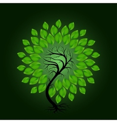 Tree with green leafage on dark green background vector image vector image