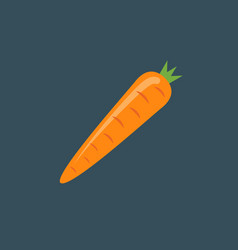 Carrot icon isolated carrot vector