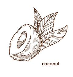 Half of natural coconut with small palm leaves vector