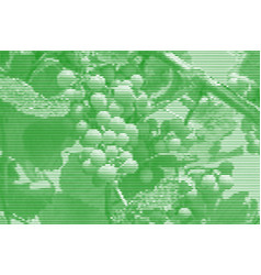 Image collage of ripening grapes on the vine from vector