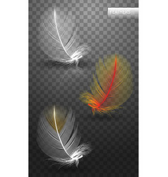 Isolated falling fluffy twirled feathers on vector