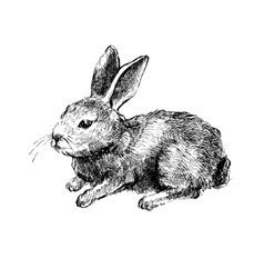 Hand drawn rabbit on white vector image