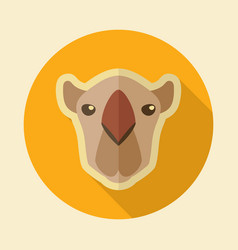 Camel flat icon animal head symbol vector