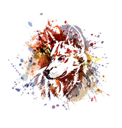 Color of a wolf head vector