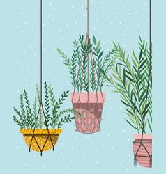 Houseplants in macrame hangers vector