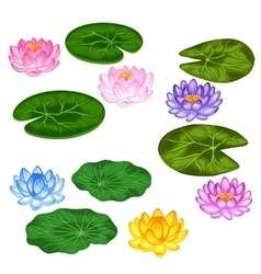 Natural set stylized lotus flowers and leaves vector