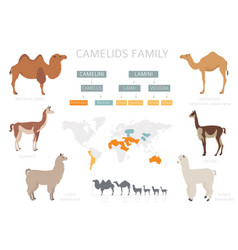 Camelids family collection camels and llama vector
