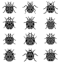 gray ladybugs vector image