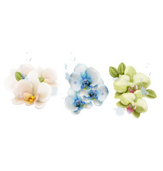 orchid flowers watercolor isolated vector image