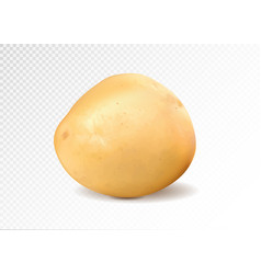 Realistic potato 3d vector