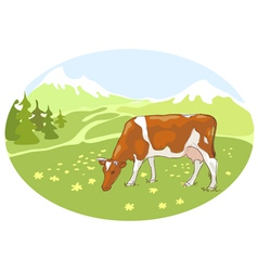 The white and red cow is grazed on alpine mead vector
