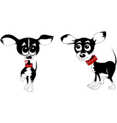 Two chihuahua vector