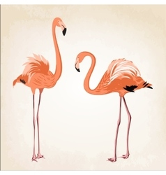 Beautiful pink flamingo birds vintage background vector image vector image