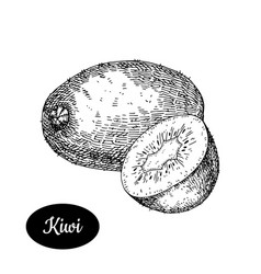 hand drawn sketch style fresh kiwi vector image vector image