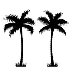 palm tree 002 vector image vector image