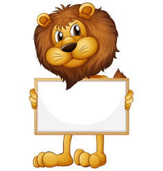 blank sign template with wild lion on white vector image