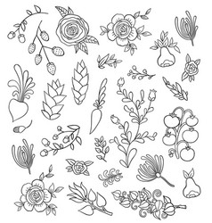 large set hand-drawing flowers vector image