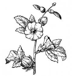 vintage floral vector image