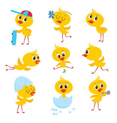 cartoon set of cute easter baby chicken character vector image