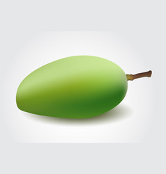 green mango isolated on a white background vector image vector image