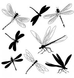 dragonflies tattoo vector image