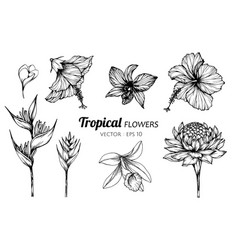 collection set of tropical flower drawing vector image
