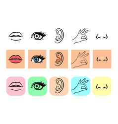 Five senses icons vector