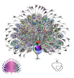 Peacock multicolored beauty tropical bird vector