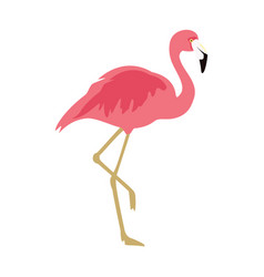 pink flamingo exotic bird cool flamingo vector image