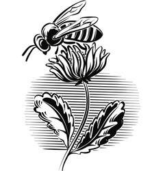 Worker bee on a flower vector