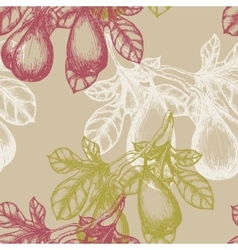 Fig Fruit on the branch hand draw sketch vector image vector image